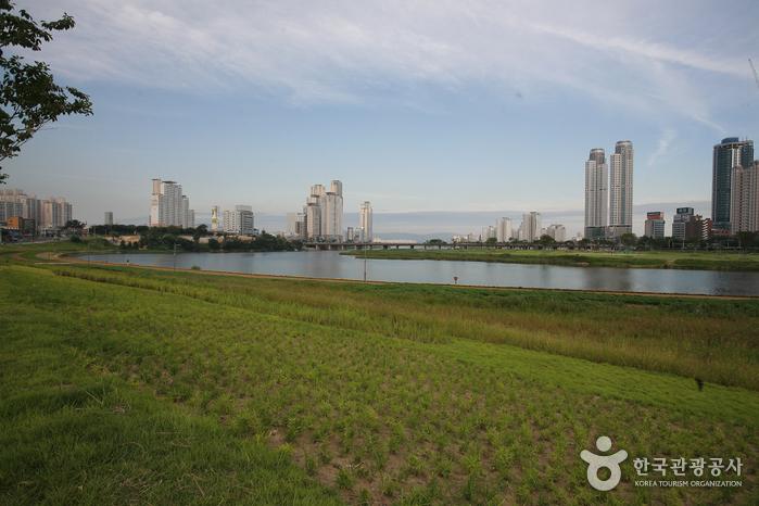 Taehwagang River (태화강)