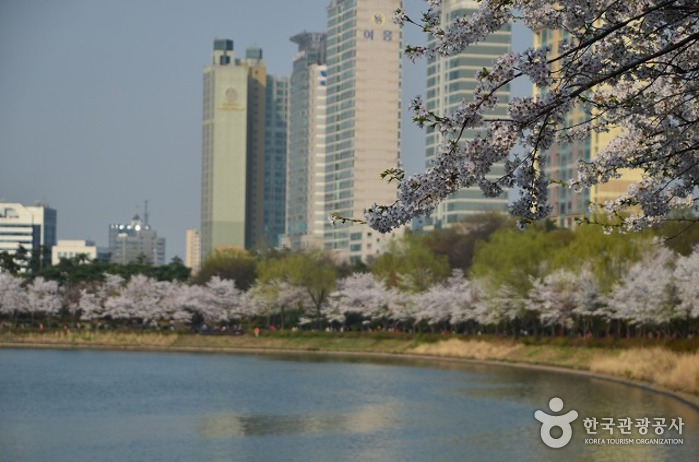 See Seokchon Kirschblütenfestival (석촌호수 벚꽃축제)