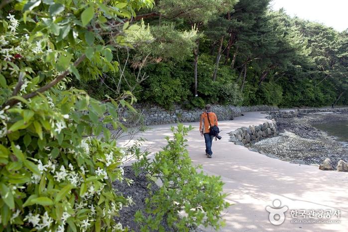 제승당으로 향하는 해안길은 옥빛 바다와 초록 숲이 아름답게 이어진다.