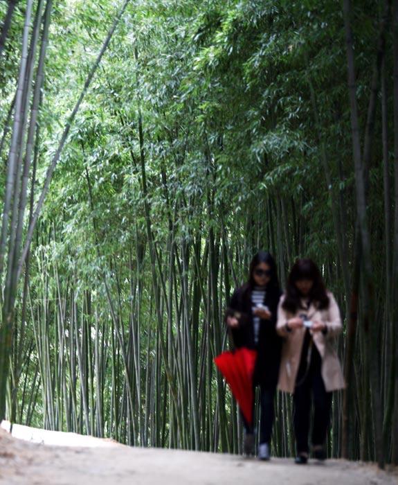 녹음이 우거진 숲의 싱그러움
