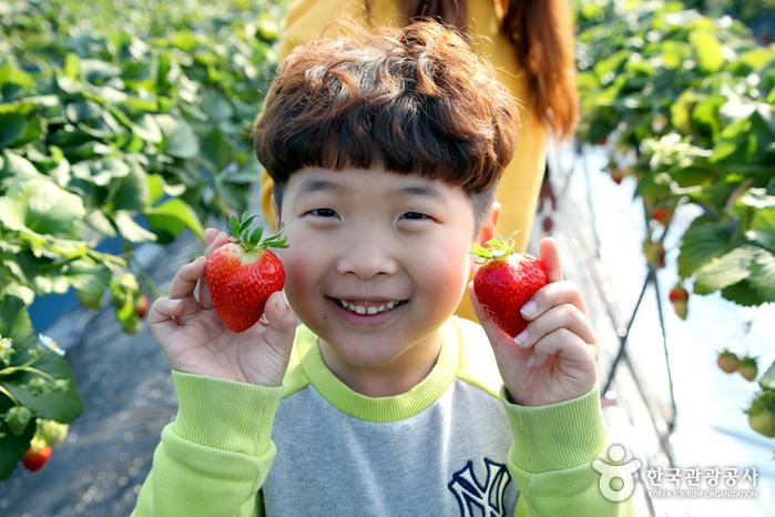 주먹만 한 딸기를 자랑하는 아이