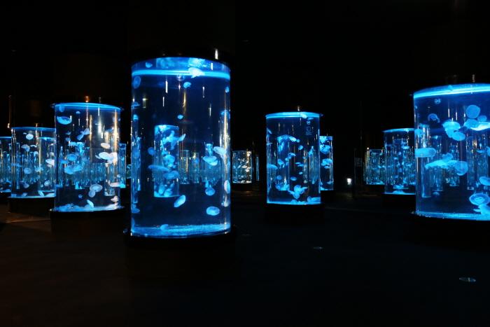 해파리 수족관의 환상적인 광경