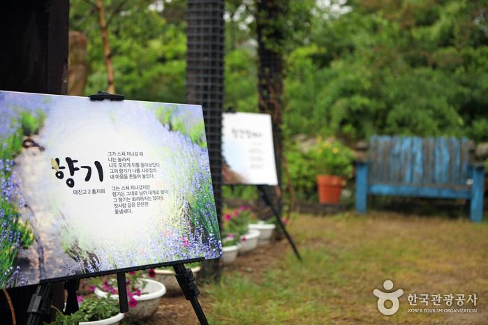 Goseong Lavender Festival (고성 라벤더축제)