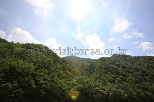 응봉산(강원)