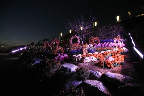 서울억새축제 2018  사진21