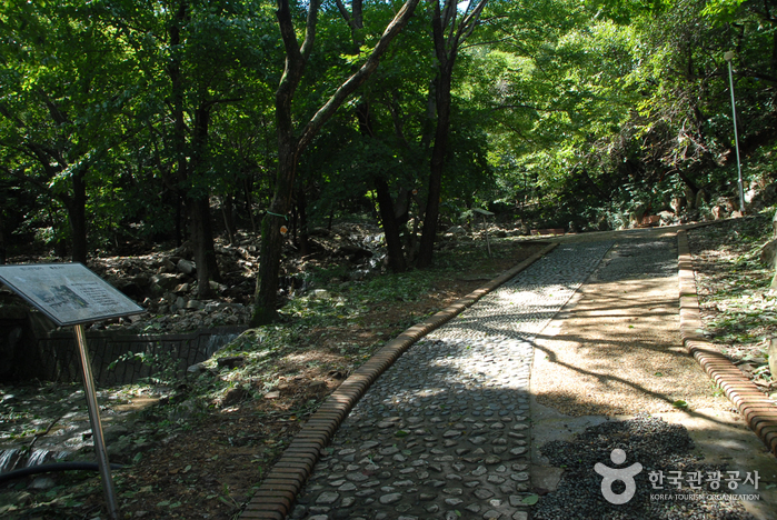 Oseosan National Recreational Forest (국립 오서산자연휴양림)