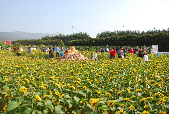 巨済島花祭り(거제섬꽃축제)