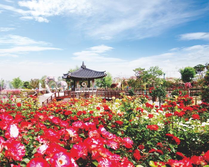 Международный фестиваль роз в уезде Коксон (곡성 세계장미축제)4