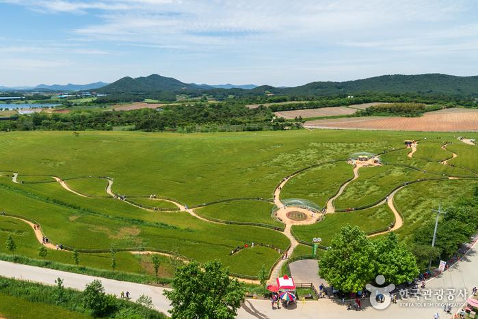 Фестиваль ячменных полей в Кочхане (고창 청보리밭축제)