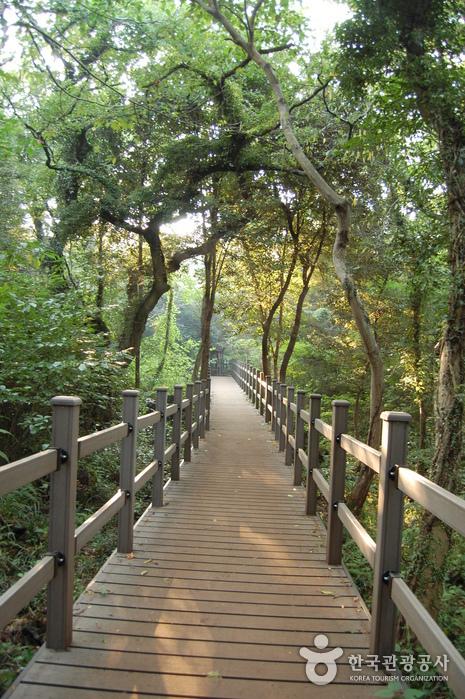 Bijarim Forest (비자림)