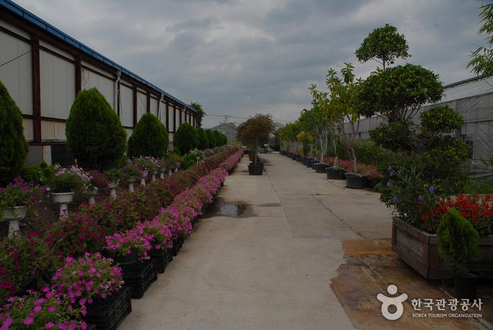 Asan Botanical Garden (세계꽃식물원)