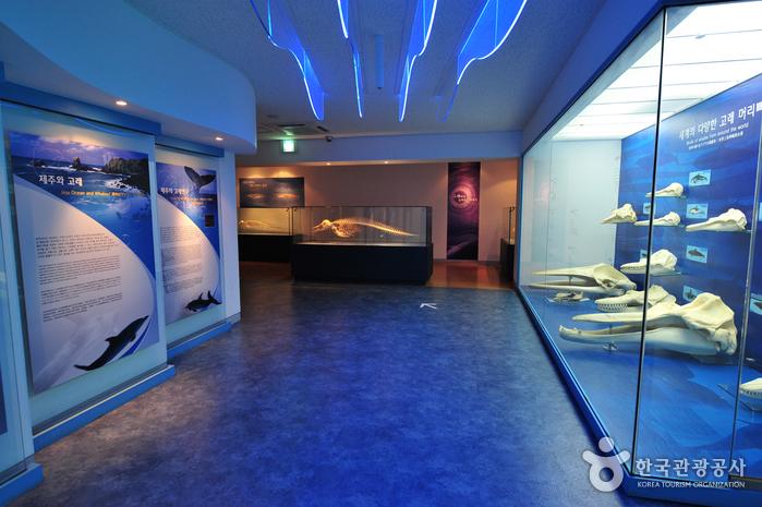 Музей фольклора и естественной истории Чечжу (제주도민속자연사박물관)9