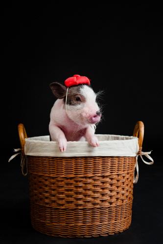 Pig Museum (돼지박물관(돼지보러오면돼지))