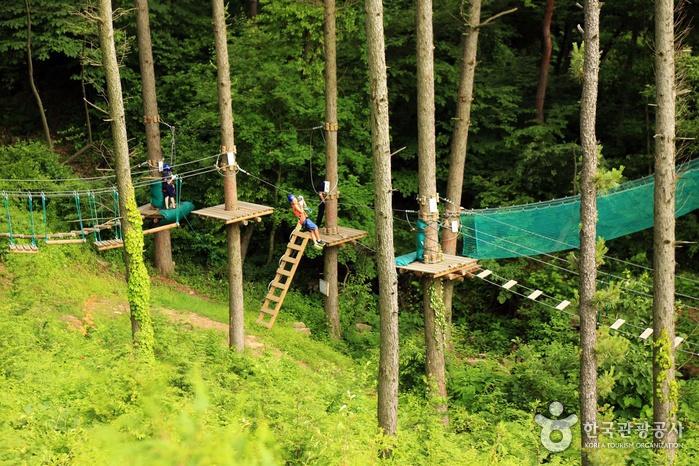 용인자연휴양림 에코어드벤처