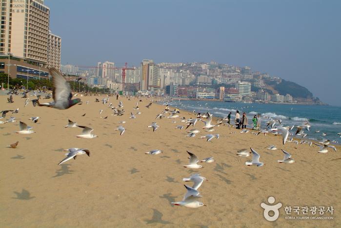Haeundae Beach (해운대해수욕장)