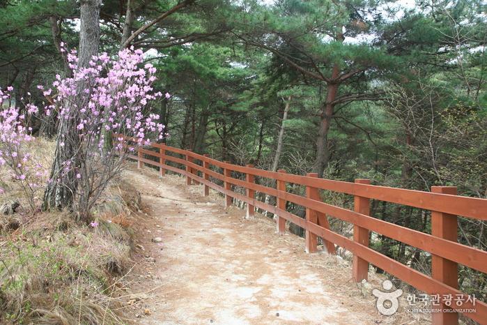 초록 능선에 조성된 철쭉 화원, 지리산 바래봉 2