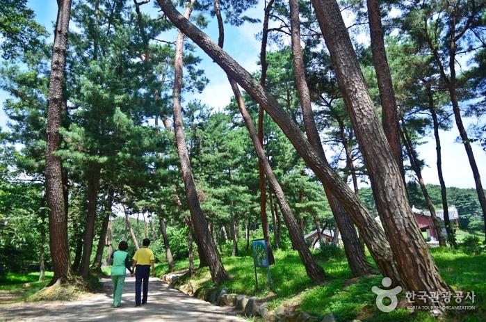 동구릉 산책로 녹음
