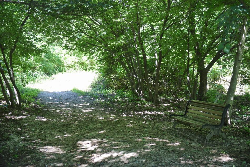 피톤치드 가득한 초록의 숲