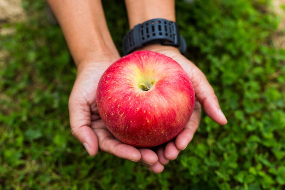 대추 먹고 사과 따고, 풍성한 보은 여행 사진