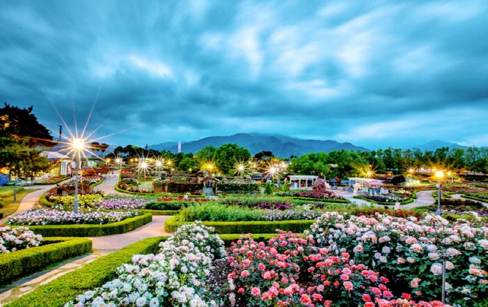 Международный фестиваль роз в уезде Коксон (곡성 세계장미축제)8