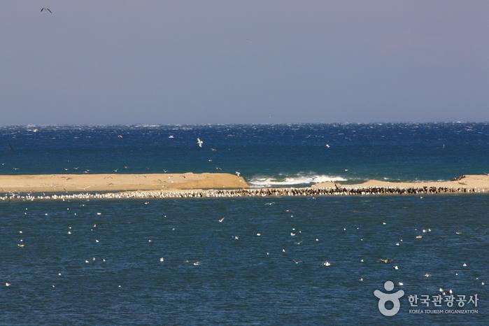 Namdaecheon Stream (...