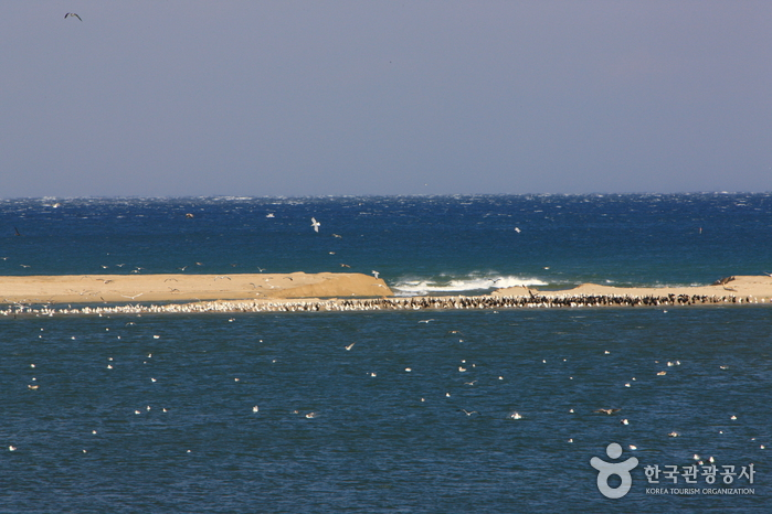 Namdaecheon Stream (남대천)