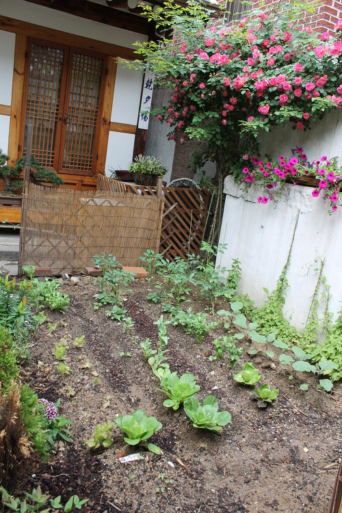 Wwoof Korea Guesthouse