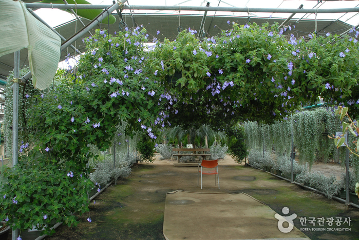 World Flower Botanical Garden (세계꽃식물원)