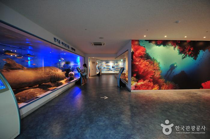 Музей фольклора и естественной истории Чечжу (제주도민속자연사박물관)8