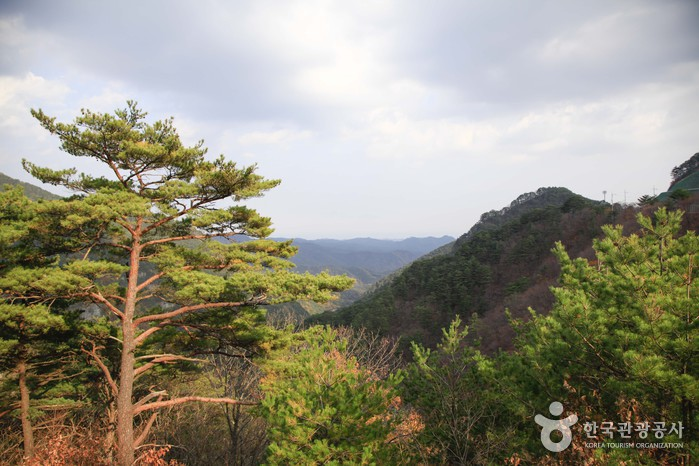 Berg Baekamsan/Uljin (백암산/울진)