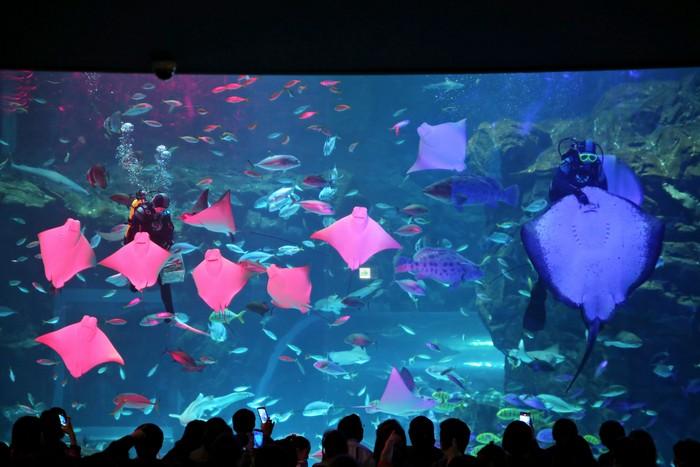 아쿠아리스트가 물고기에게 먹이를 주는 모습도 볼 수 있다.