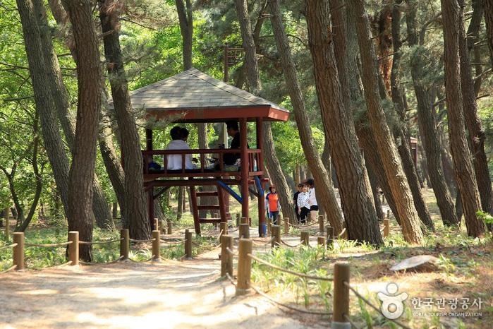 장항송림산림욕장 (장항 솔숲)