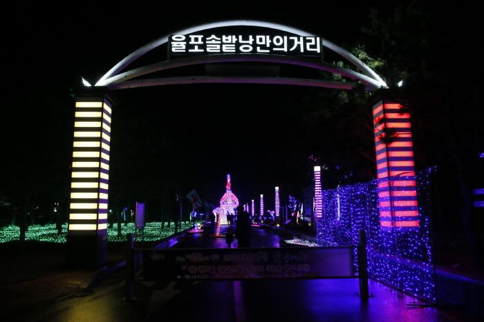 Boseong Green Tea Plantation Light Festival (보성차밭 빛축제)