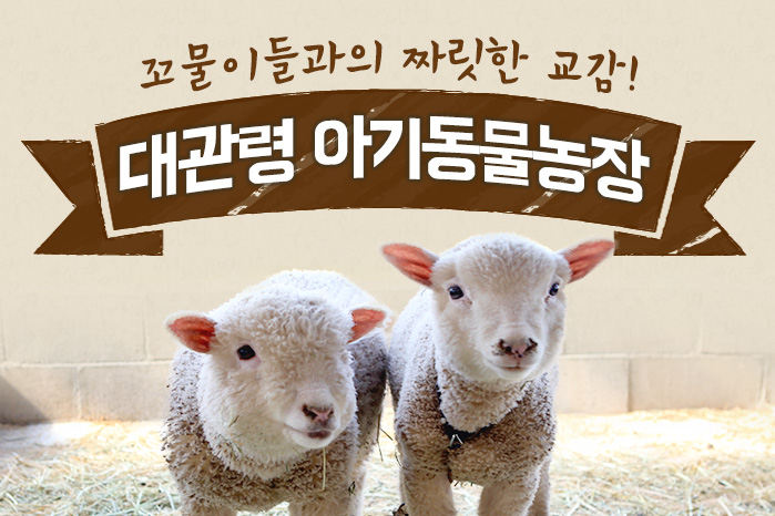 [여행 카드] 꼬물이들과의 짜릿한 교감! 아기동물농장