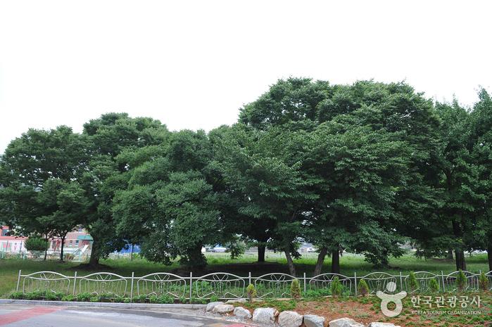 함평 향교리 느티나무·팽나무·개서어나무 숲