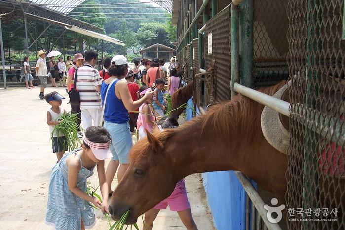ハンターポニー農場(한터 조랑말농장)