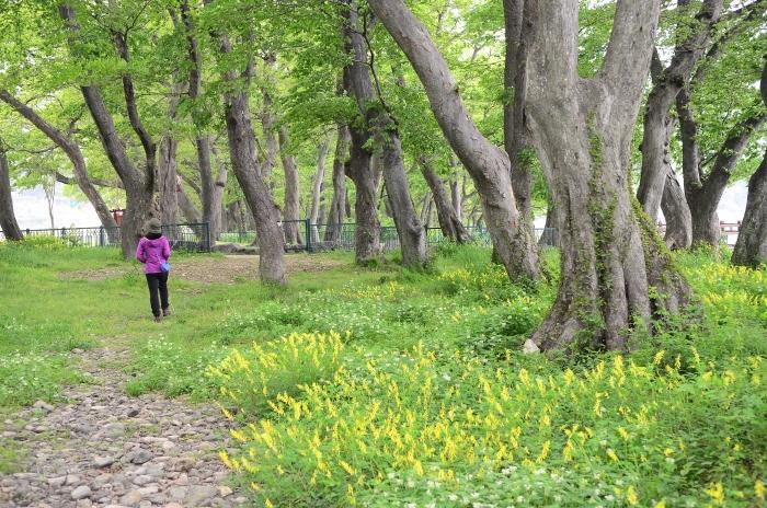 활엽수와 상록수가 풍성한 남해 물건리 방조어부림은 고기를 부르는 숲이다.