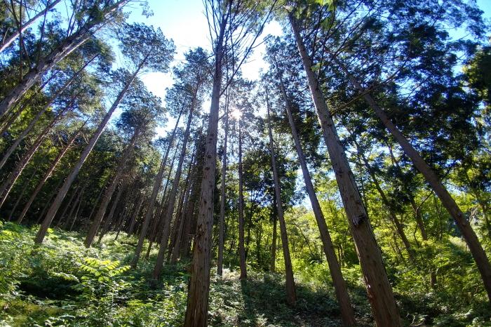 부귀 편백숲 삼림욕장