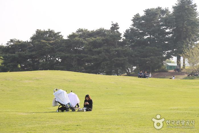 올림픽공원. 나홀로 나무가 있는 언덕에서 유모차를 대고 쉬는 엄마