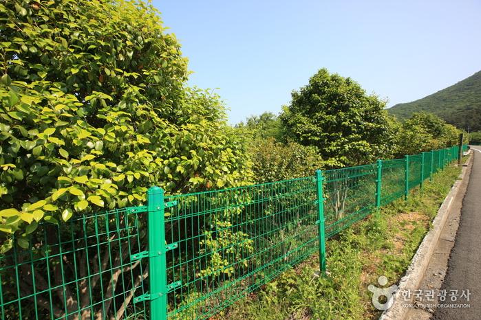 거제 학동리 동백나무 숲 및 팔색조 번식지