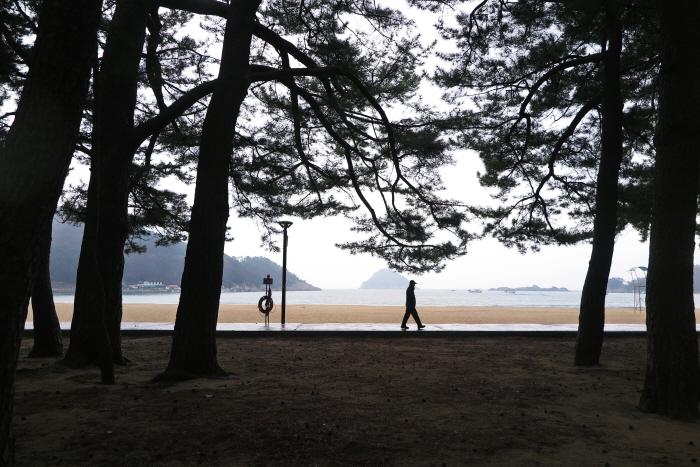 울창한 소나무 숲이 일품인 상주은모래비치
