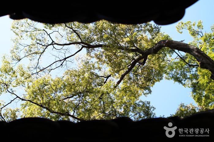 지붕 사이로 보이는 나뭇가지.