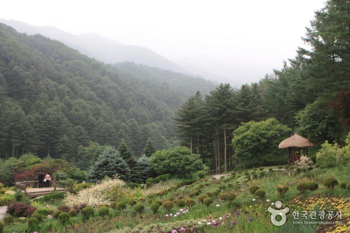 아침고요수목원 사진36