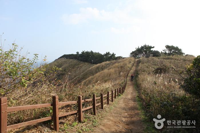울릉도 사진6