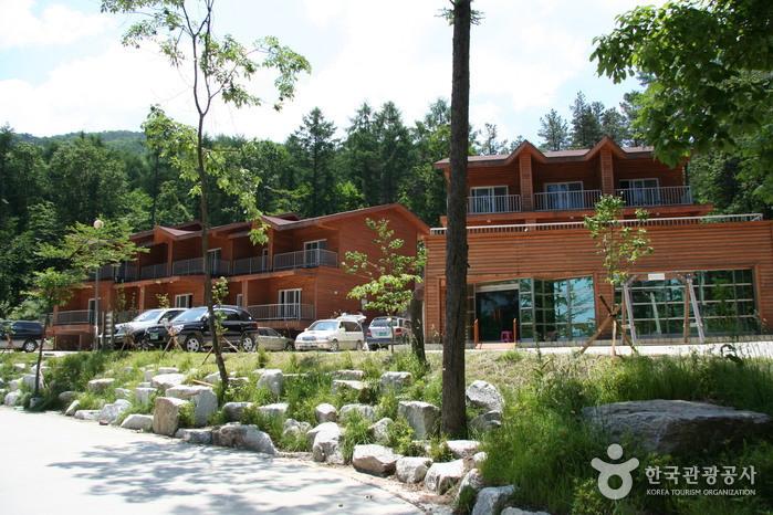 Yumyeongsan National Recreational Forest (국립 유명산자연휴양림)