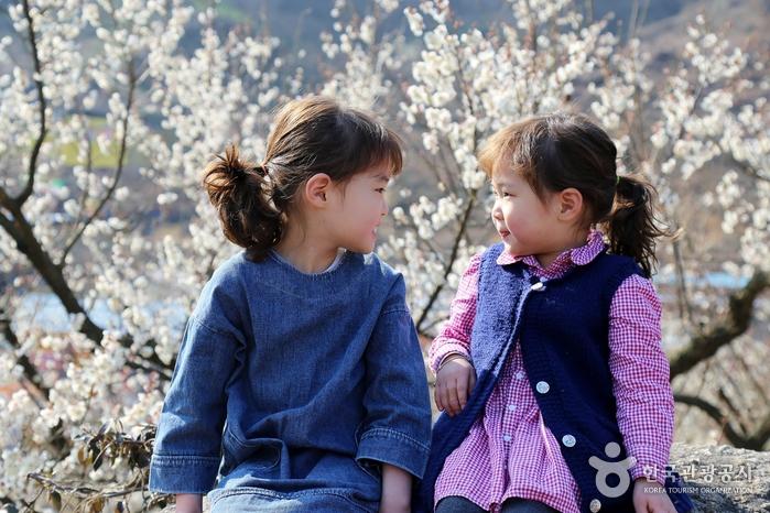 어린아이들이 서로를 바라보며 매화만큼 예쁜 미소를 짓고 있다.