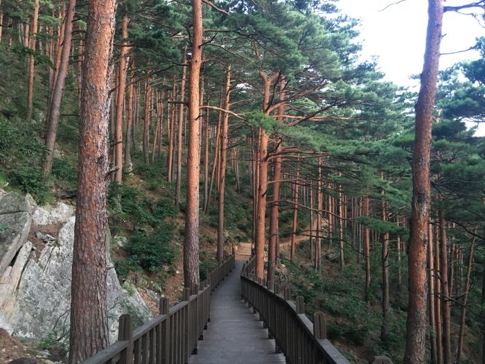 국립대관령치유의숲