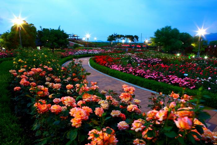Международный фестиваль роз в уезде Коксон (곡성 세계장미축제)3