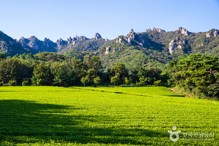 Gangjin Dawon Tea Plantation (전남 강진다원)