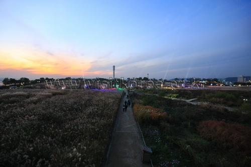 서울억새축제 2018  사진18